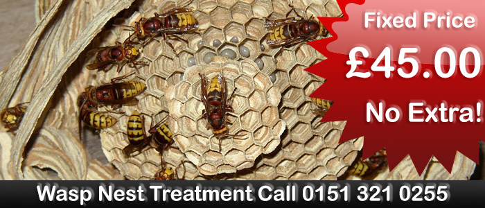 Liverpool Pest Control Wasp nest treatment or removal, fixed price £35.00 covering Liverpool and Merseyside. Contact us on  0151 321 0255  for more info