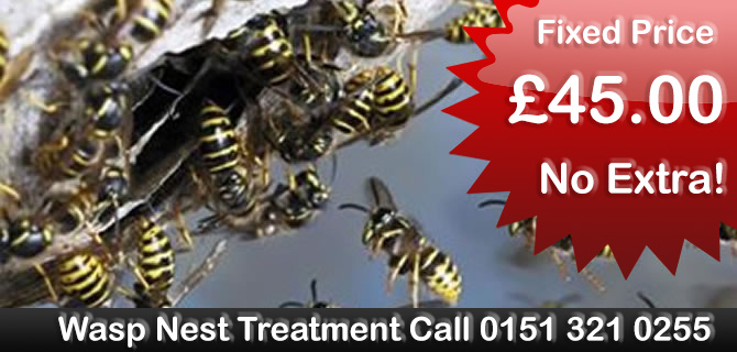 Wasp Control Liverpool wasps nest treatment, removal fixed price £35.00 no extras, same day, 24 hour, 7 days a week
